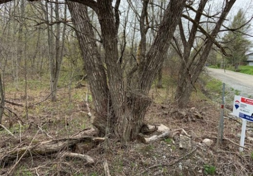 Land for sale, Eastman
